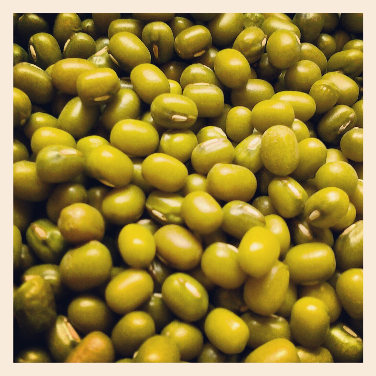 intraspecific competition of mung beans One of the central questions in ecology is how important is competition among individuals of the same species (intraspecific) and among individuals of different species.