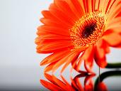 #14 Flowers Wallpaper