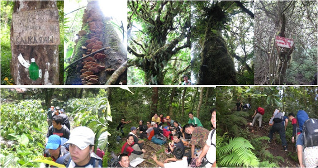 inside the mossy forest of Mt. Cristobal, Mt. Cristobal Dolores Quezon, CLIMBING MT CRISTOBAL, CRISTOBAL THE DEVIL MOUNTAIN, mt cristobal trail