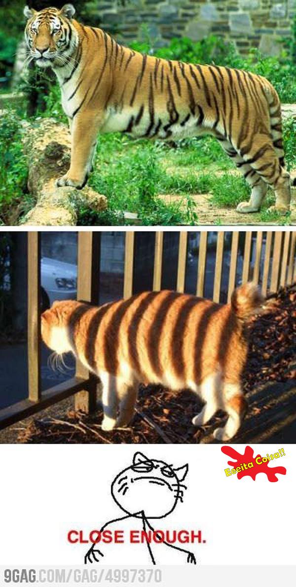tigre, gato, close enough, imitando, eeeita coisa