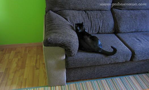 Lazy boy sleeper sofa elegant lazy boy sleeper sofa best - Sofas para gatos ...