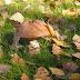 Za co kochamy grzyby, czyli wspomnienie z dzieciństwa