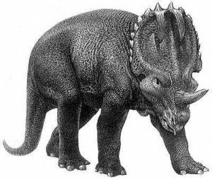single horned triceratops Pulheim