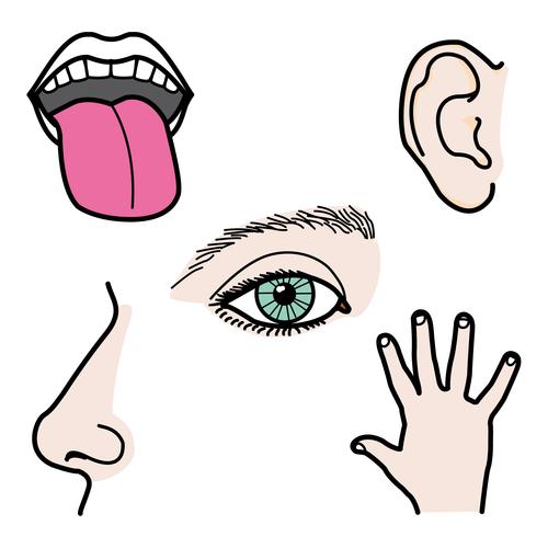 Vídeo: mejorando el tacto y el contacto corporal