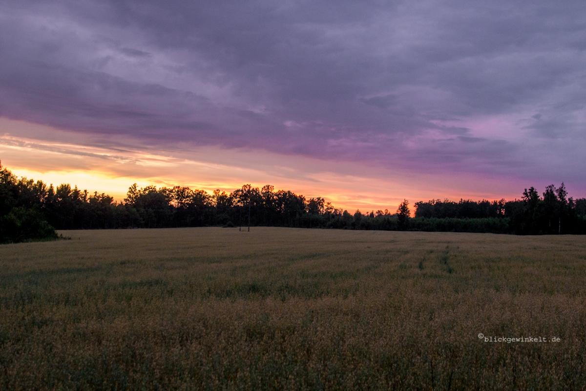 Sonnenuntergang über einem Gerstenfeld in Südschweden