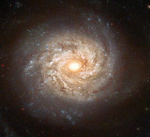 المجرة إن جي سي 3982