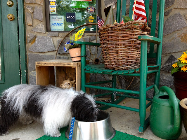 Cosmo Havanese shops in Highlands, NC