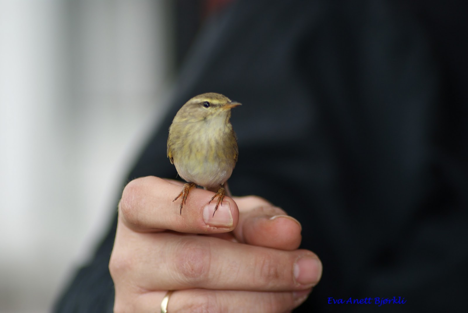 en fugl i hånden