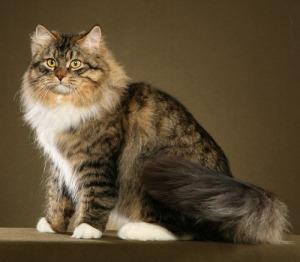 Cute Pussy Cat 25
