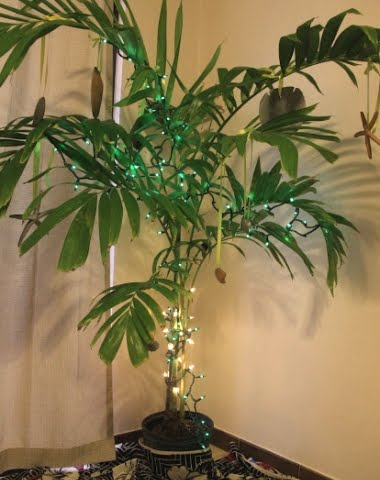 palm tree plant with Christmas lights