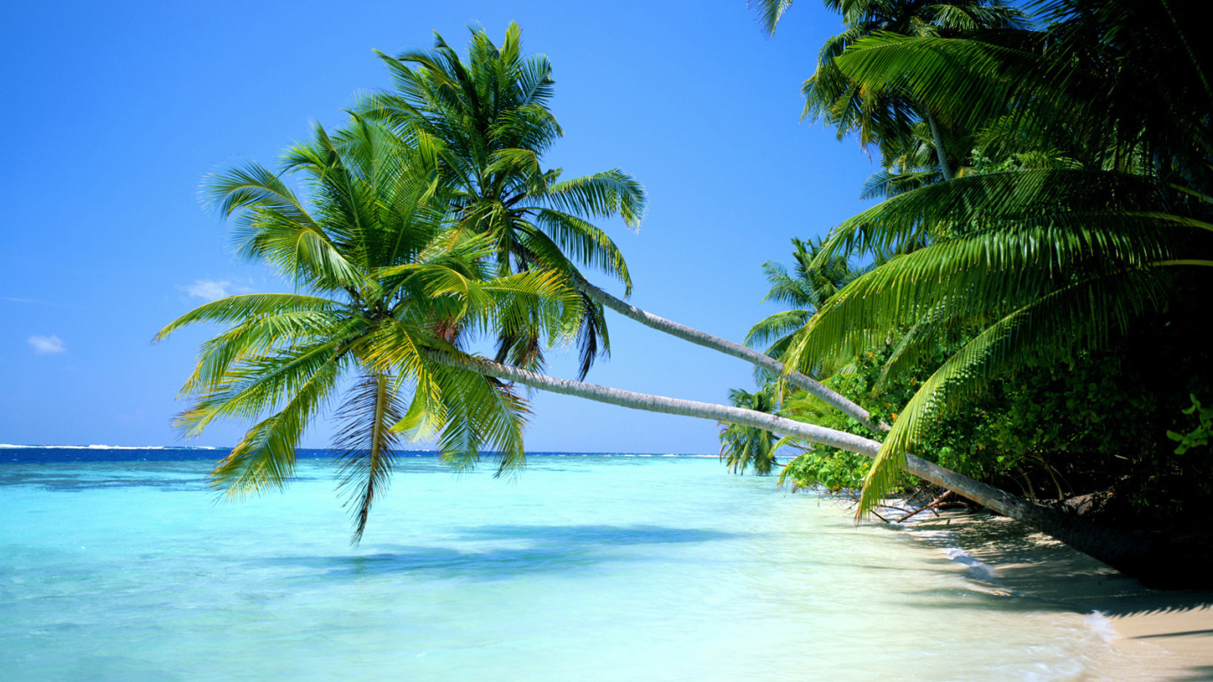 Tropical Beach Wallpaper