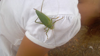giant green katydid climbing on a person's back