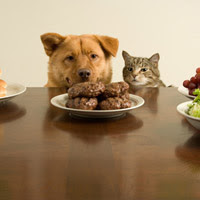 A dog and cat looking at hamburgers