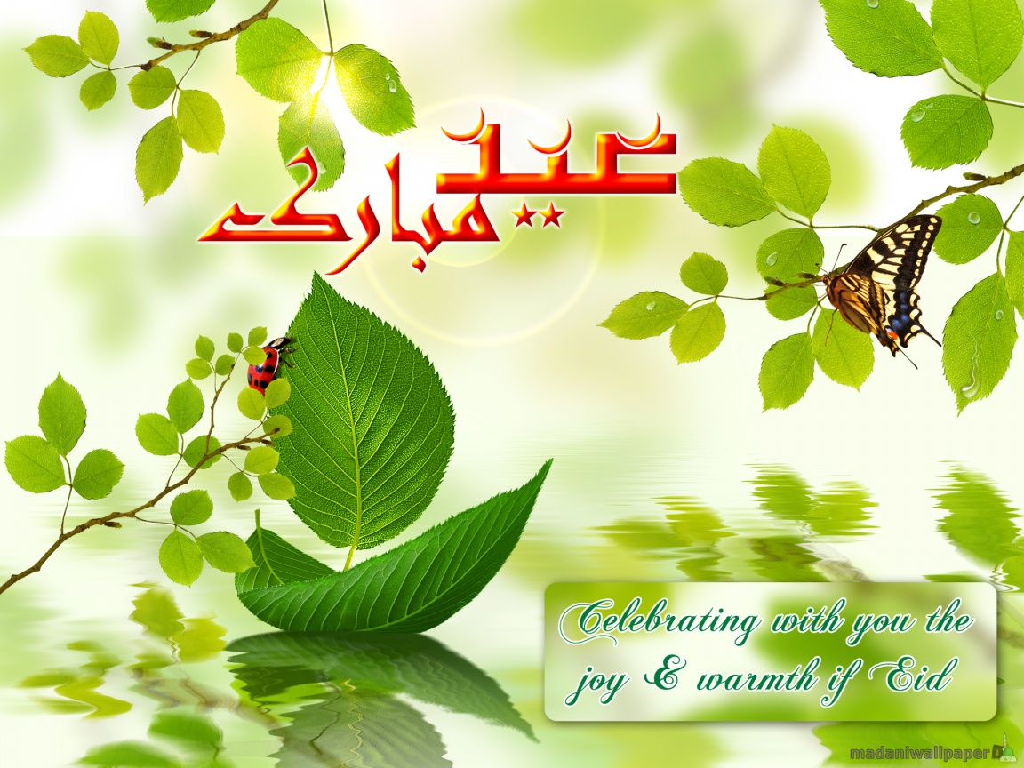 Eid Ul Adha Cards Beautiful Eid Greetings Wallpapers 2012