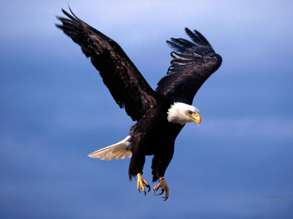 Magnífico Página De águila Fotos - Dibujos Para Colorear En Línea ...