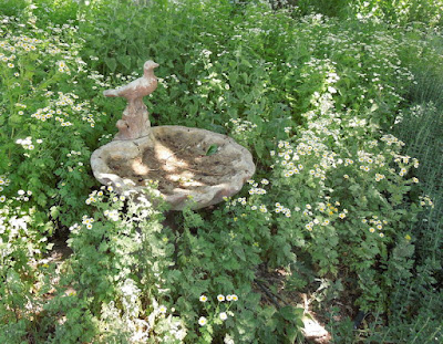 Bird Bath in Fat Cat Farm Herb Garden Bed, ©B. Radisavljevic, 2013