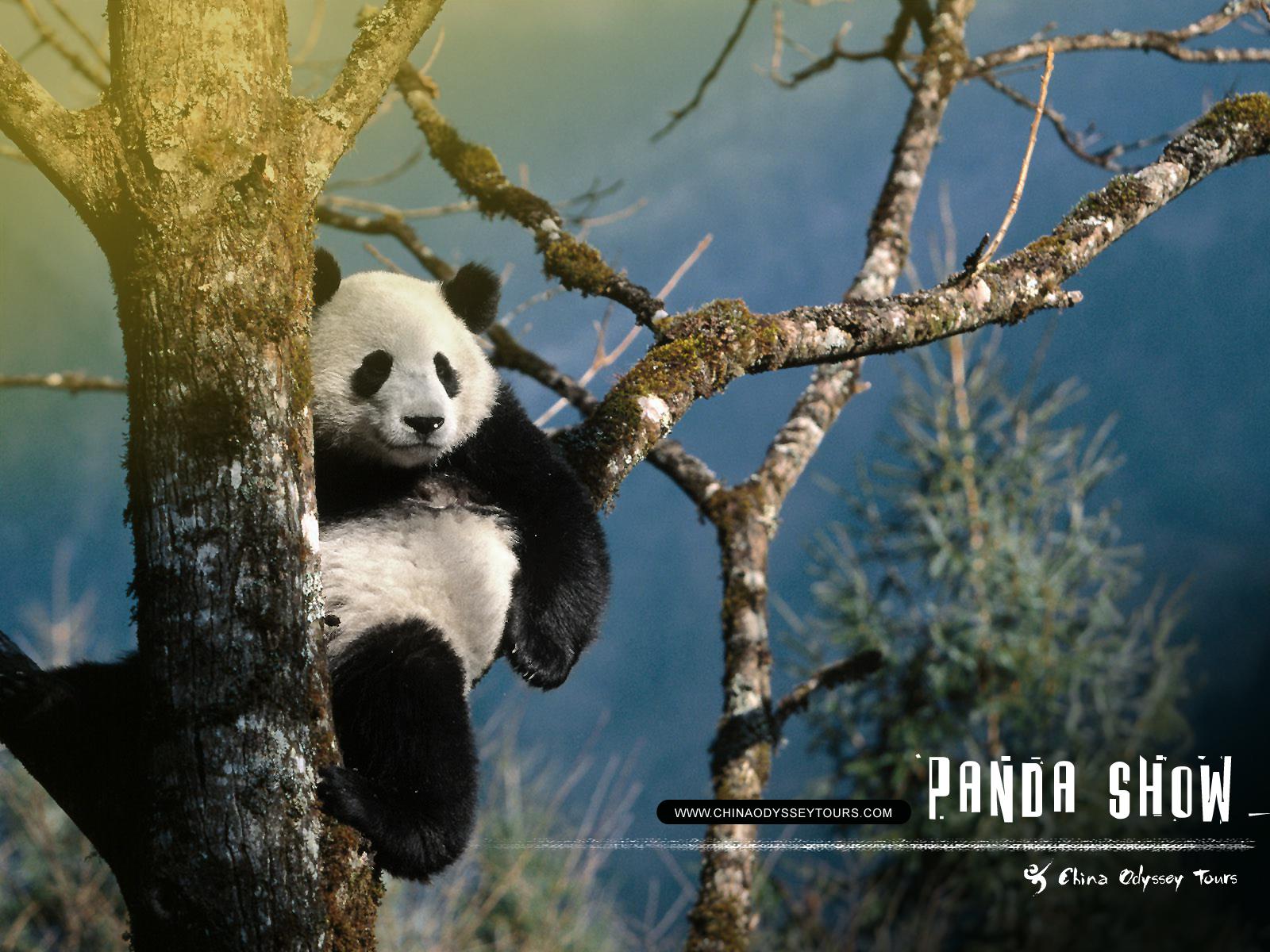 Unique wallpaper amazing pandas