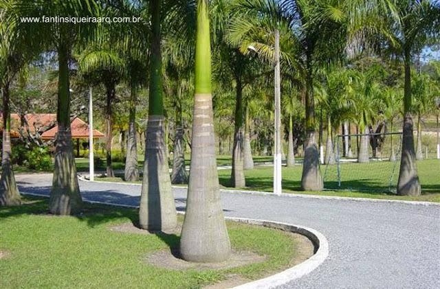 Camino interior de fazenda de Rondonia, Brasil