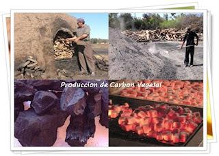 produccion-carbon-vegetal-leña-madera-puerto-vallarta-maderas-cuale-bahia-de-banderas
