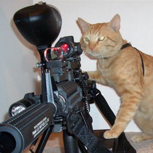 Funny Pics Of Dogs With Guns Funny Animals W...