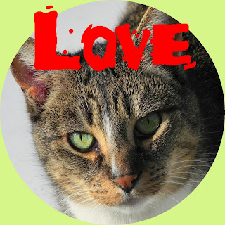 love Valentine cat