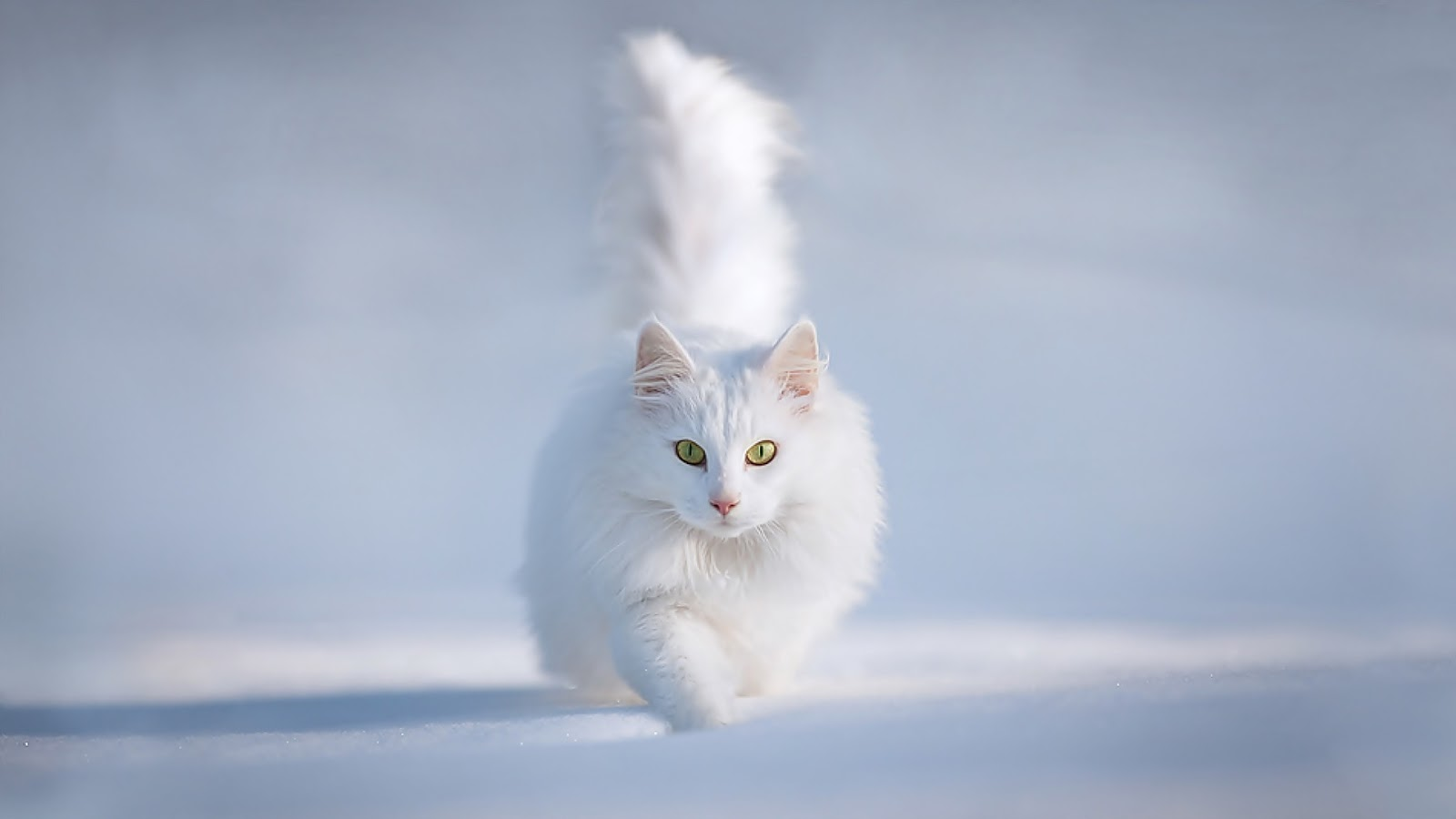 Cats images Cat in the Snow Wallpaper HD wallpaper and background ...