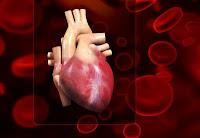 Tronco arterioso persistente- embriologia