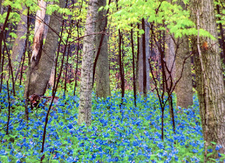 "Blue Bells, Mill Creek Park, YMCA, BIKWIL, ""But I Know What I Like"""