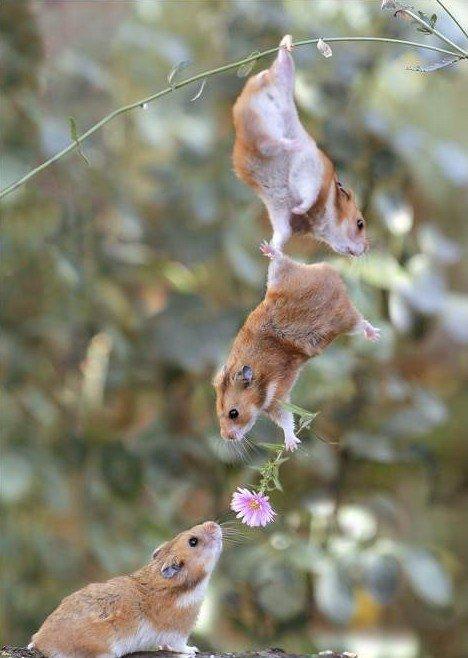 Cuestionario imagenes 2.o - Página 2 Hamsters