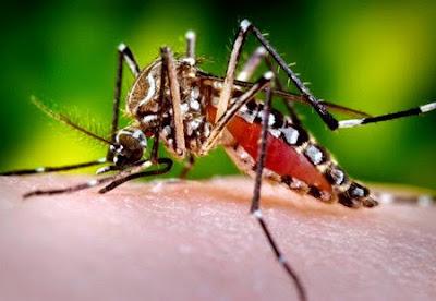 Diệt ấu trùng muỗi truyền bệnh