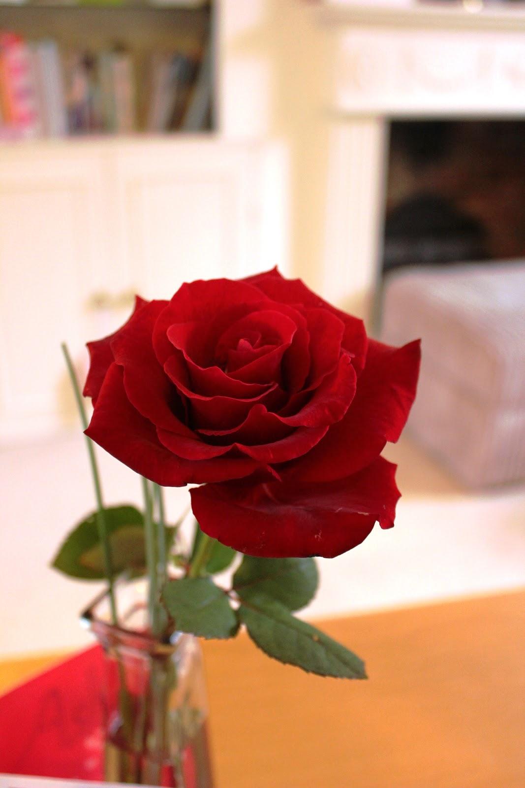 Day card happy valentine s