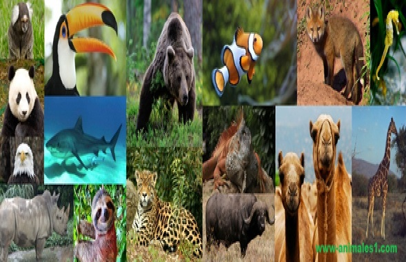 Animales En El Mundo