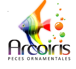 Peces arcoiris peces ormanetales arcoiris for Reproduccion de peces ornamentales