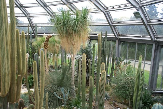 cacti, cactuses, or cactu