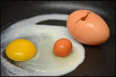 Ajaib, Ada Telur di Dalam Telur