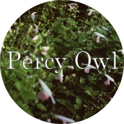 Percy Owl