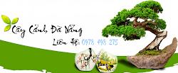 Cây Cảnh Đà Nẵng,cây xanh Đà Nẵng,cay xanh da nang,Công ty bán cây cảnh Đà Nẵng,mua cây cảnh Đà Nẵng