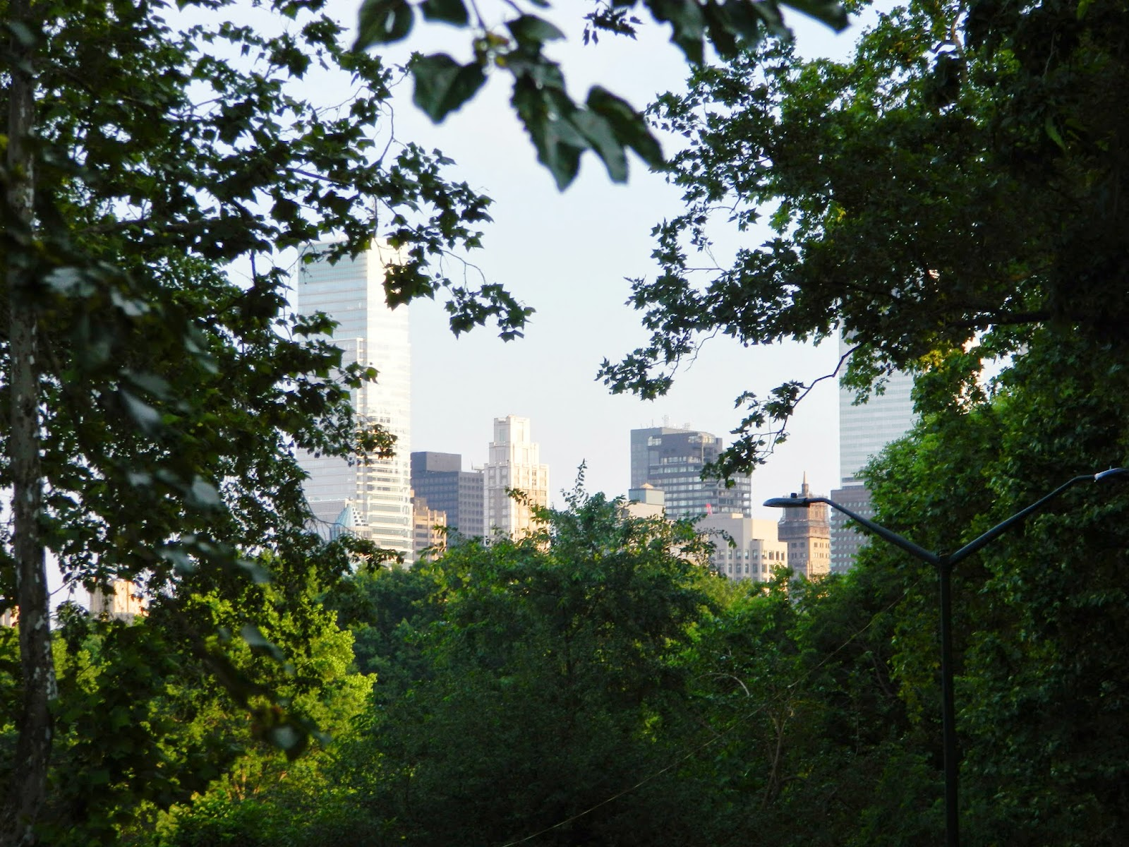 new york city architecture central park tree view