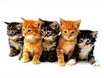 Visitá el blog de los Gatitos de la Sarmiento
