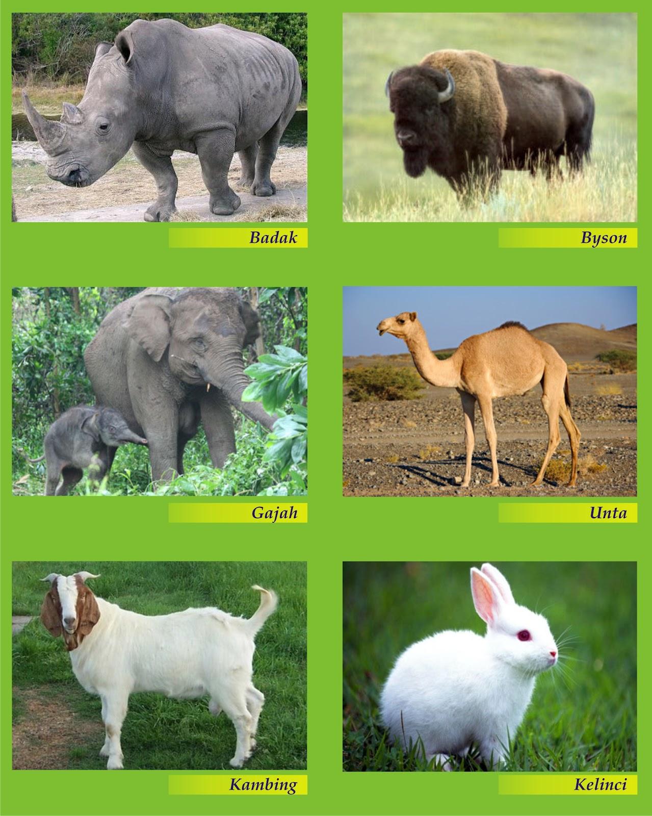 10 Binatang Purba Ganas Multimedia Satu Bebek Wikipedia Bahasa Soal Dan Pembahasan Ipa Kelas 6