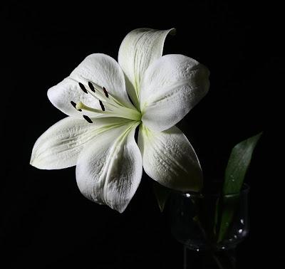 Foto Blüte weiße Lilie
