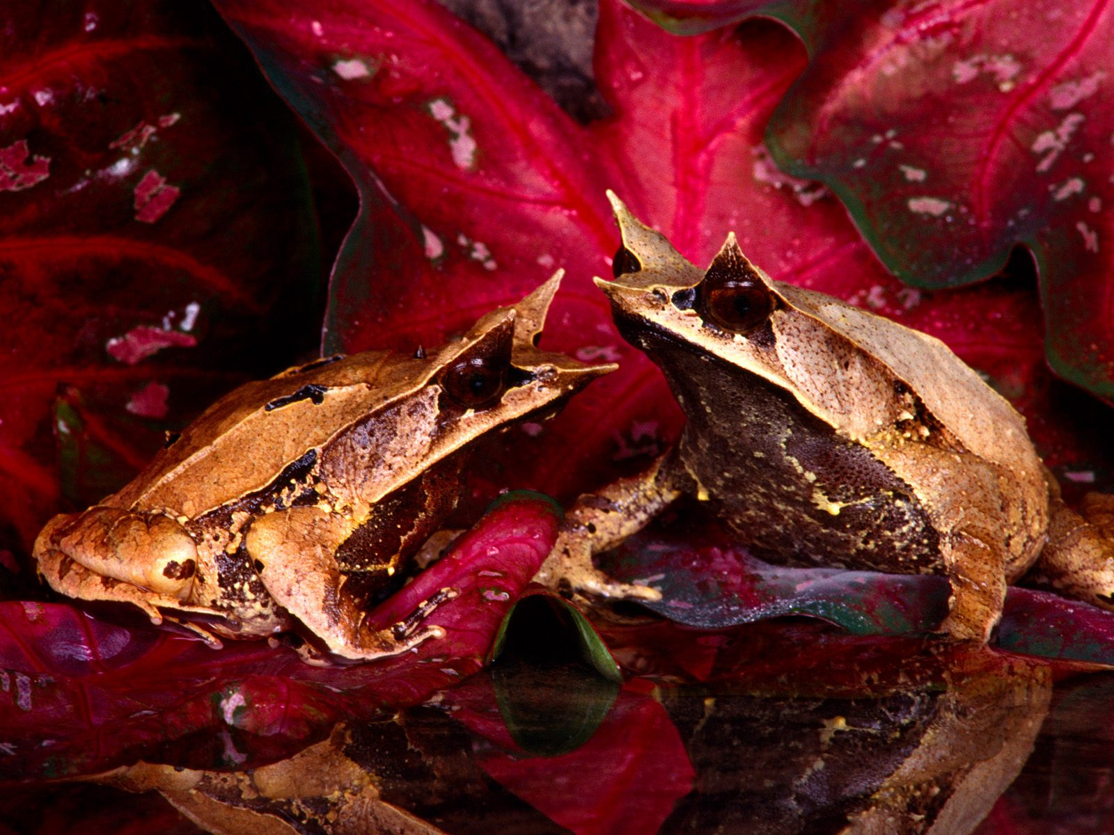 http://1.bp.blogspot.com/-DkFhL3T894I/Tn7EcozJc6I/AAAAAAAADkU/8HrjlRGo8HE/s1600/20_Colorful_Frogs_Wallpapers_HQ__1600_X_1200__www_HQPictures_tk-20_jpg_Frog_Wallpaper_14.jpg