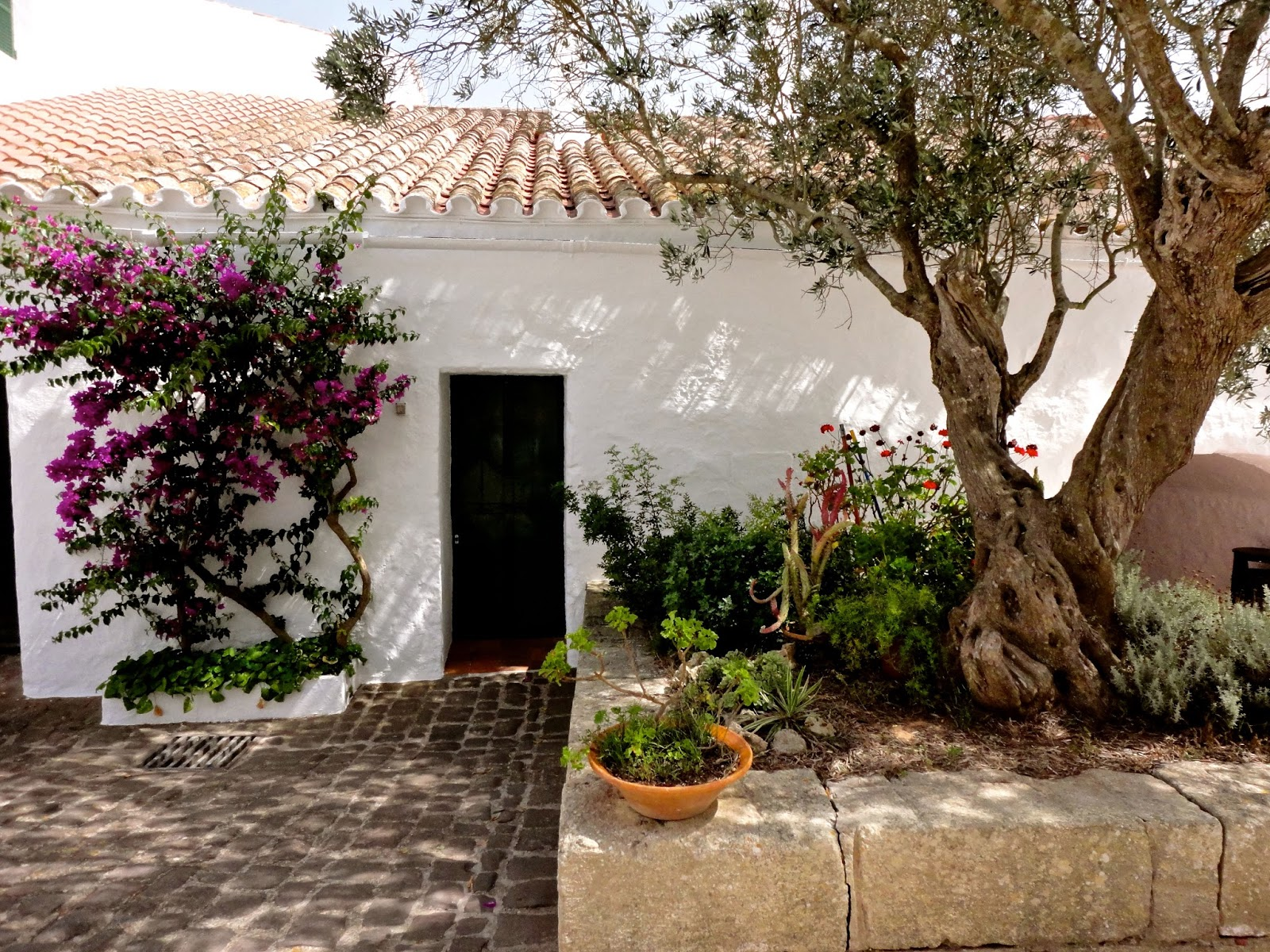 Travel Inspiration | Menorca, Spain | rustic white cottage with gnarled tree