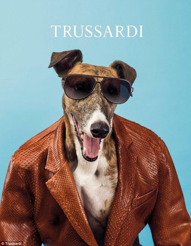Cães modelo são tendências de moda