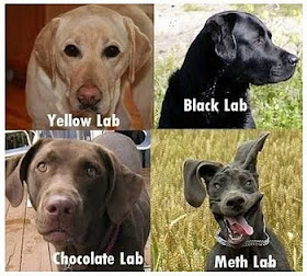 Barkley Says - Know Your Labs!