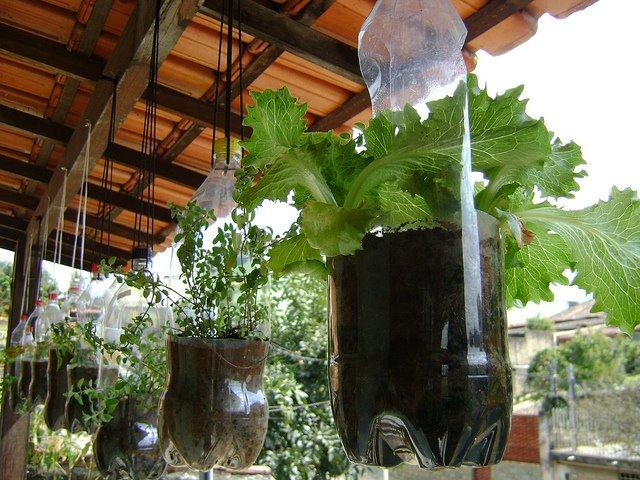 jardim vertical de garrafa pet passo a passo : jardim vertical de garrafa pet passo a passo: de jardins e hortas verticais pela internet não poderia deixar de