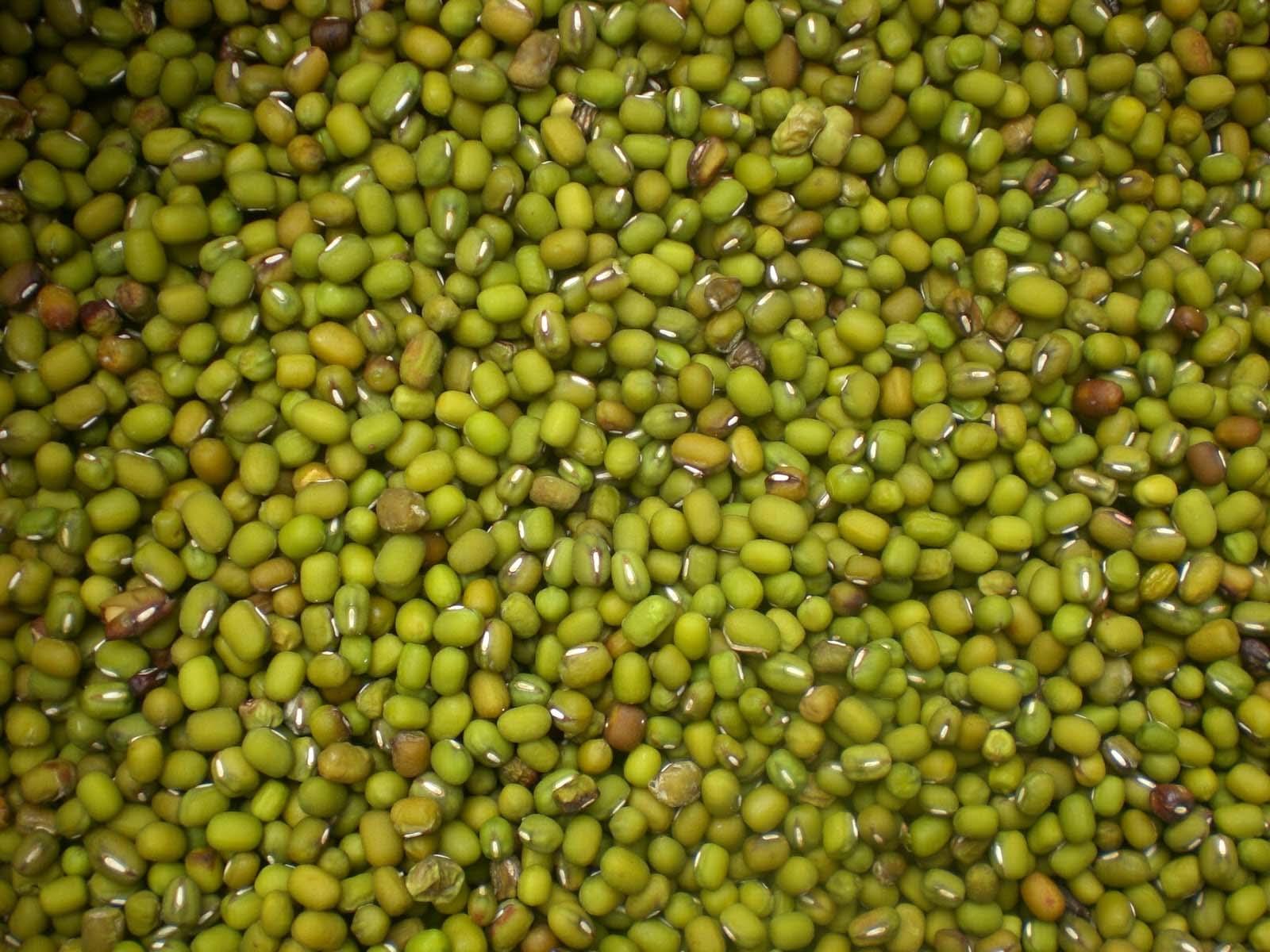 Kacang Hijau, Budidaya Kacang Hijau