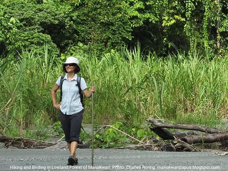 Riverwalk Tour in Manokwari Lowland Forest