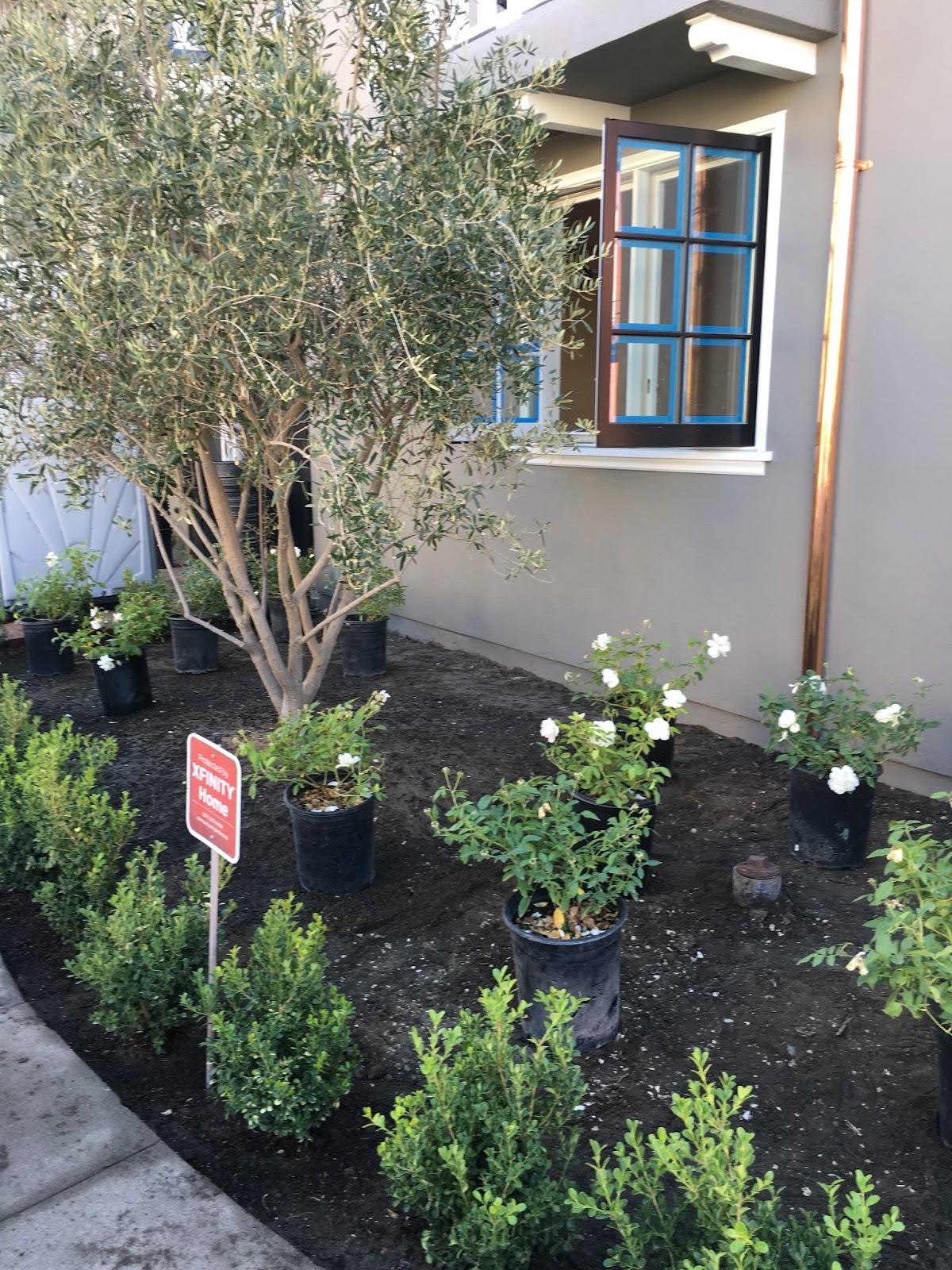 Vignette design exterior progress paint and landscape for Xd garden design