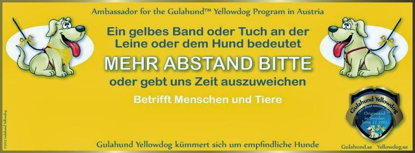 Gelber Hund Austria